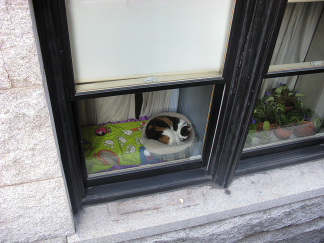 03_cat_img_0012.jpg