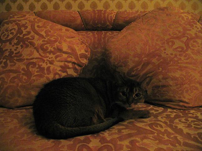 12_cat_katiescat1.jpg